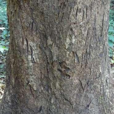 Traces de griffes de tigre