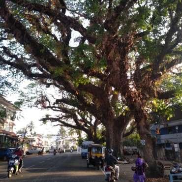 Arbre fort Kochi