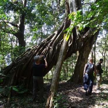 Forêt du parc de periyar
